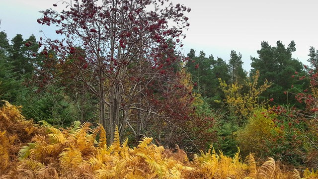 Autumn trees with different shades image