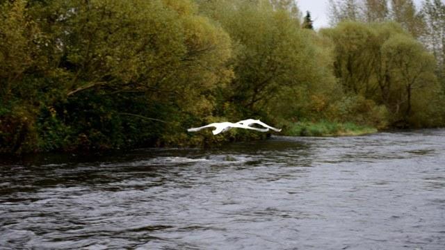 Birds flying over river image