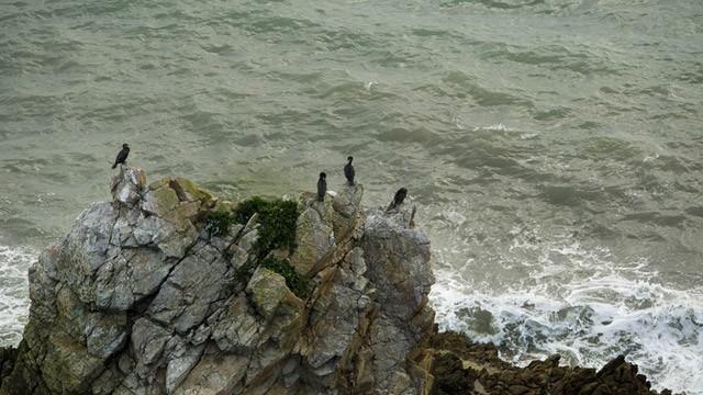 Birds on a sea rock image