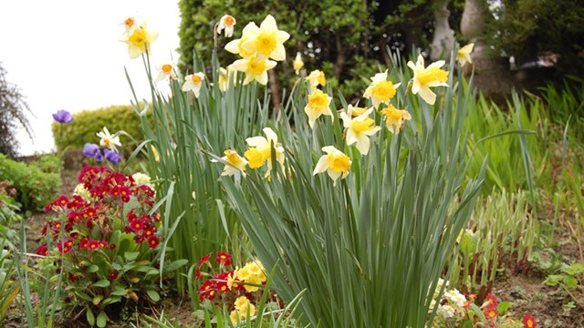 Close up of flowers image 3