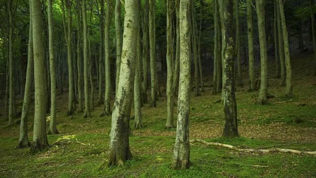 Green floor in woodlands image