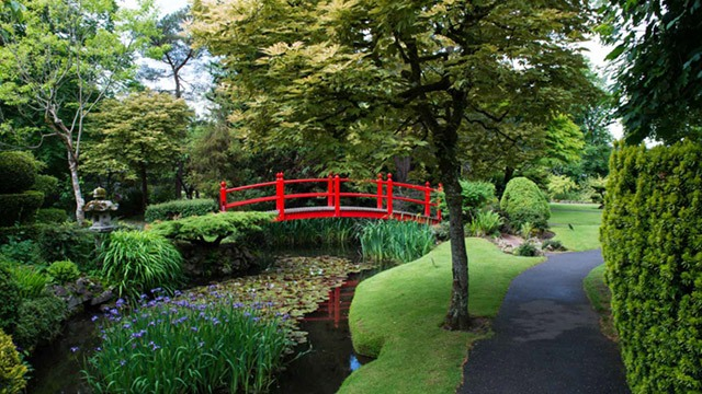 Red bridge in Japanese gardens image