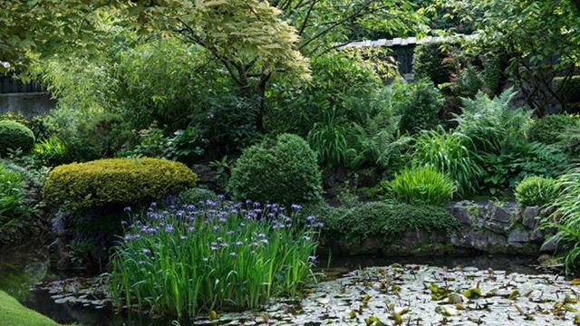 Lake in Japanese gardens image
