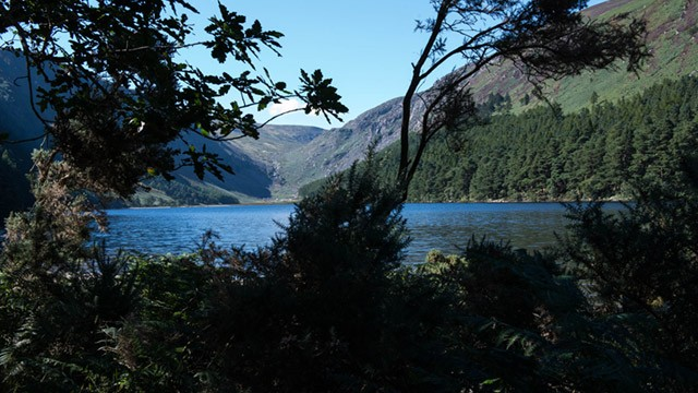 Lakeside view from behind trees image