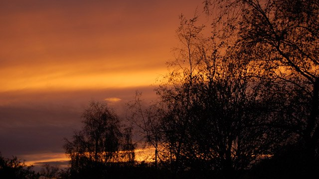 Sunsets behind the trees img