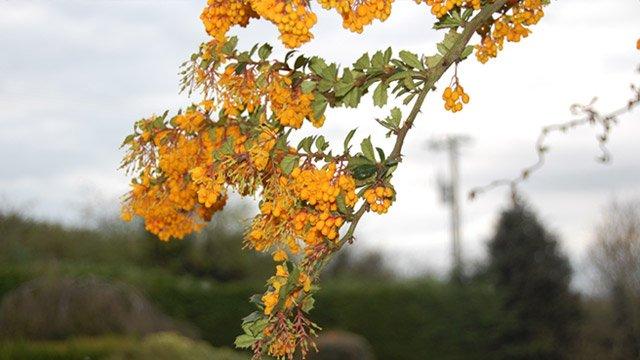 Close up of tree blossom image