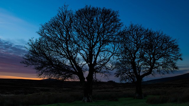 Trees at sunset image