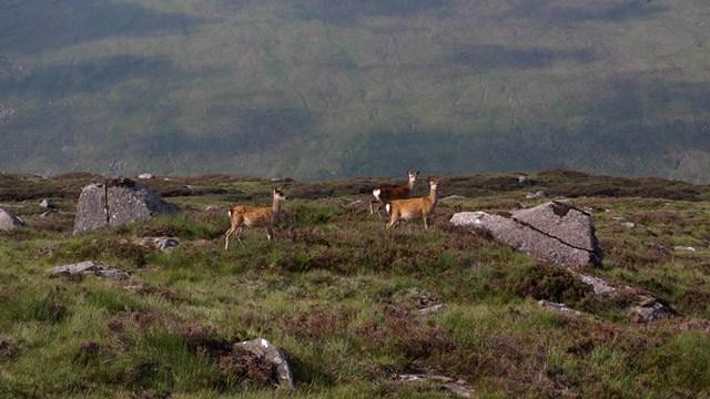 Wild deer landscape picture image