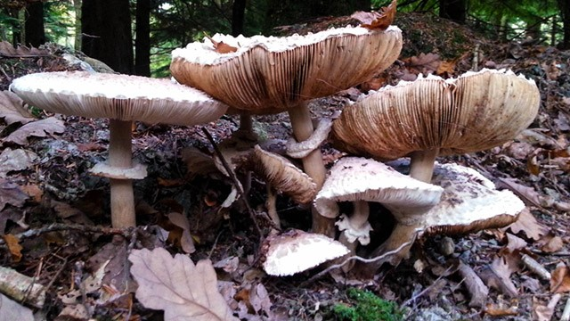 Wild mushrooms on forest floor image