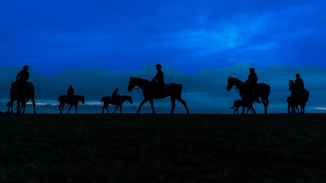 Horses with riders against dark blue sky image